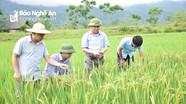 Nông dân huyện miền núi được hỗ trợ trên 3 tỷ đồng để thay giống lúa sạch bệnh