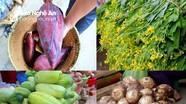 Kỳ Sơn: Khoai sọ, gừng, rau....đầu mùa được giá