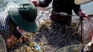 Nghệ An: Nuôi trồng thủy sản ước đạt giá trị trên 2.900 tỷ đồng