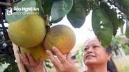 Nông dân Nghệ An chuẩn bị đặc sản vùng miền phục vụ thị trường Tết
