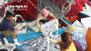 Ngư dân Nghệ An trúng mẻ cá hố 1,7 tỷ đồng