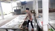 Mất vệ sinh ở các lò giết mổ lợn