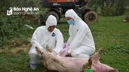 Ít nhất 4 năm nữa mới có vắc xin phòng chống dịch tả lợn châu Phi