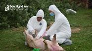 Nghệ An: 10 mẫu xét nghiệm lợn bệnh ở 3 địa phương âm tính với dịch tả lợn châu Phi