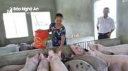 Vì sao ở Nghệ An dịch tả lợn châu Phi đang chỉ xảy ra tại hộ chăn nuôi nhỏ lẻ?