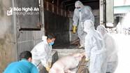 Dịch tả lợn châu Phi tiếp tục lây lan ở Nghệ An