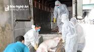 Địa phương thứ 18 của Diễn Châu ghi nhận có dịch tả lợn châu Phi