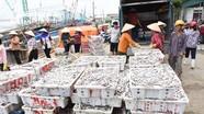 Ngư dân Hoàng Mai trúng đậm cá trỏng sau bão số 2