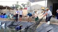 Người dân Nghệ An bán rẻ tôm, di chuyển cá chạy bão số 4