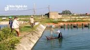 Nông dân Nghệ An tất bật thu hoạch hoa màu, thủy sản trước khi mưa lớn đổ bộ