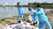 Nghệ An: Dịch tả lợn châu Phi tái bùng phát ở huyện Diễn Châu