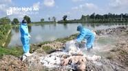 Dịch tả lợn châu Phi tái phát trên địa bàn huyện Diễn Châu