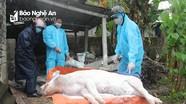Thêm 1 xã ở Diễn Châu tái bùng phát dịch tả lợn châu Phi