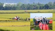 Nghệ An: Lúa xuân một số nơi đạt năng suất trên 85 tạ/ha