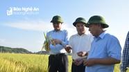 Phó Chủ tịch UBND tỉnh kiểm tra tiến độ thu hoạch lúa xuân