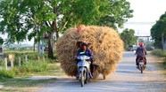 Nông dân Nghệ An đội nắng ra ruộng gom phụ phẩm thu hàng chục triệu đồng