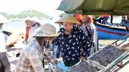 Cá trỏng ở Nghệ An chạm mức giá kỷ lục