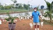 Nghệ An khoanh vùng ổ dịch cúm gia cầm A/H5N6 tại Yên Thành