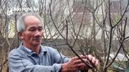 Rét đậm 'hãm' hoa nở sớm, người trồng đào khấp khởi chờ bán Tết