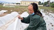 Nông dân Nghệ An bám ruộng, bám biển trong giá rét