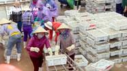 Hàng trăm tấn cá trỏng tươi rói cập cảng cá Nghệ An dịp cận Tết