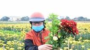 Hoa cúc Tết ở Nghệ An rẻ 'chưa từng thấy'