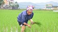 Nông dân Nghệ An ra đồng chăm sóc lúa xuân ngày mùng 3 Tết