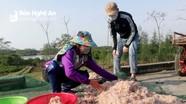 Ngư dân Nghệ An trúng ruốc biển ngày đầu năm mới