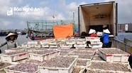 Hàng trăm tàu cá cập cảng lớn nhất Nghệ An sau 7 ngày ra khơi đầu năm mới