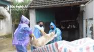 28 xã của huyện Thanh Chương có bệnh dịch tả lợn châu Phi