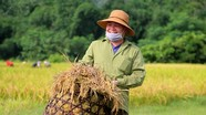 Vùng cao Nghệ An được mùa lúa xuân nhất từ trước đến nay