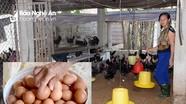 Nghệ An: Trứng gia cầm tăng giá trong mùa dịch Covid-19