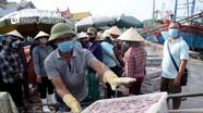 Tàu thuyền về tránh bão số 3, cảng cá Nghệ An phong phú hải sản