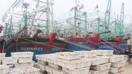 Hải sản Quỳnh Lưu lưu thông thuận tiện dù địa phương đang thực hiện Chỉ thị 16