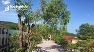 Nghệ An yêu cầu một trường học vội vàng chặt cây xanh phải rút kinh nghiệm