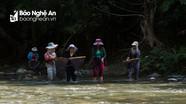 """""""Độc, dị"""" nghề săn nòng nọc ở vùng cao Nghệ An"""