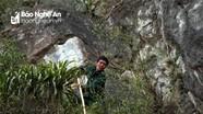 Đánh cược mạng sống để bắt chim trên vách đá cheo leo
