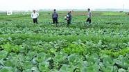 Thẩm định tiêu chí xây dựng nông thôn mới ở Hưng Nguyên