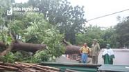 Lốc xoáy trước bão gây thiệt hại lớn tại huyện Anh Sơn