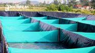 Ứng dụng công nghệ 'zíc zắc' lọc nước nhanh trong nuôi tôm vụ đông ở Nghệ An