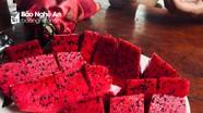 Thanh long ruột đỏ - đặc sản mới của Con Cuông