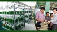 Nghệ An: 48 sản phẩm nông nghiệp được gắn sao OCOP