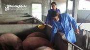 Hơn 19 tỷ đồng hỗ trợ nông dân Diễn Châu bị thiệt hại do dịch tả lợn châu Phi