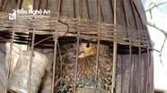 Nghệ An: Phát hiện 3 loài chim mới chưa từng ghi nhận có ở Bắc Trung Bộ