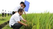 Tổng Công ty CP Vật tư nông nghiệp Nghệ An: Nhà đầu tư chiến lược của nhiều đơn vị