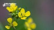 Sống động chùm ảnh hoa xuân vườn nhà