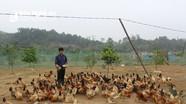 Loay hoay đầu ra sản phẩm chăn nuôi VietGAP