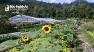 Cánh đồng ngập tràn rau và hoa ở bản người Thái