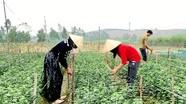 Nông hộ trồng hoa lãi 400 triệu đồng/năm ở Hoàng Mai