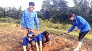 Đoàn viên thanh niên bản nghèo thuê đất trồng mía gây quỹ